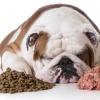 Ein Hund liegt neben Futter und frisst nicht