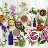 Auf einem weißen Hintergrund sind verschiedene Schälchen mit natürlichen Inhaltsstoffen wie Samen, Kräutern und Ölen angerichtet, aus denen man organische Kosmetik herstellen könnte.