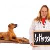 Ein Tierarzt hat bei einem braunen Hund Arthrose diagnostiziert