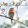Ein Vogel sitzt auf einem Ast und singt