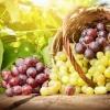 Rote und grüne/weiße Weintrauben fallen aus einem Korb